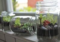 Как сделать цветущий сад в бутылке своими руками