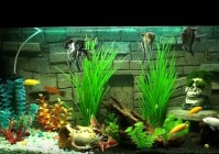Задний фон (грот) для аквариума своими руками