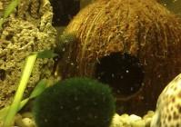 Домик для рыбок из скорлупы кокоса