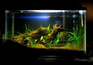 Делаем аквариумную корягу